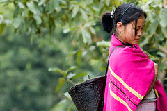 Local (Vivek M.) Tags: pink woman india culture tribal northeast arunachal siangfestival