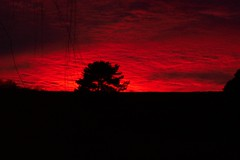 Burning Bush (Tomitheos) Tags: red sky favorite ontario tree nature spectacular rouge fire dawn google october exposure flickr published spectrum image dusk vibrant surrealism interestingness1 creative vivid images explore redsky fabulous favourite now today burningbush manifesto 2007 encyclopedia redandblack darkred blackribbon redsunset aclass stockphotography firesky dreamjournal wishingtree encarnado 100views10favourites outofsight 50faves 2on2 iloveclouds specnature bloodandfire skyred justclouds platinumphoto anawesomeshot  56faves tomitheos dusktildawn skiesrougefire sunsefavorite wonderfulworldmix   reckoningday