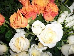 Wishes to all (Luigi Strano) Tags: flowers roses flores rose fleurs flor blossoms blumen blooms fiori blommor bungabunga maua roza bloemen blomster bulaklak hoa flors çiçekler زهرة flori λουλούδια květiny природа цветы geles lule virágok blom kukat fior cvijeće lilled blomme viragok цветя цвеќе розы ziedi цвеће квіти kbetki kuety цветочны