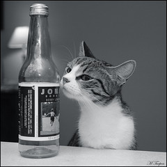 Molly's Got A Jones (Mary T.) Tags: blackandwhite bw pet animal 1025fav cat wow wonderful jones feline molly jonessoda february cutecat 600views 2007 cc600 amiaowzing february2007 platinumphoto artisticanimalphotos