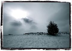 ______^__ (Plemon Studios) Tags: snow forestpark cold winter globalwarming algore freezing ice bw blackwhite sunrays