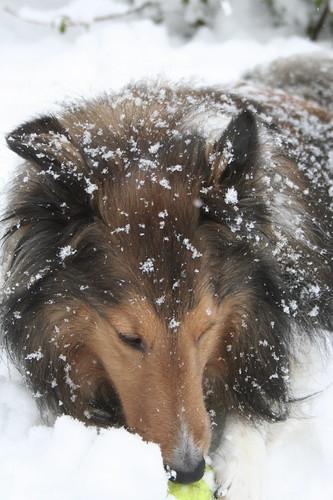 Mac loves snow