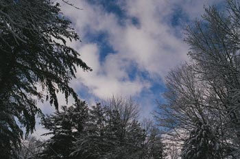 sky over snow-covered trees