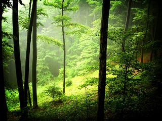 Woods Lomo