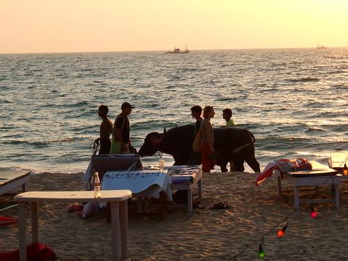 Benaulim Beach - Goa