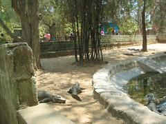 142_0048 (S Jagadish) Tags: zoo bangalore bannerghatta satish thatha paati jaagruthi janu jagadish krithi santhanam chitappa 200703