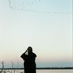 Pelicans Over Mississippi thumbnail