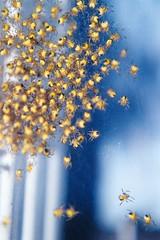baby spiders (tiffs pictures) Tags: macro spiders flickrchallengegroup flickrchallengewinner