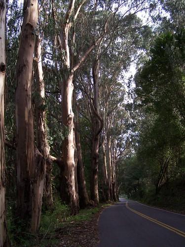 20070308 CA Highway 1