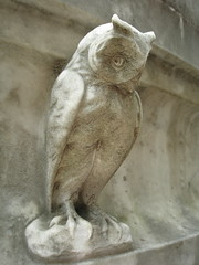 Owl in Recoleta Cemetry