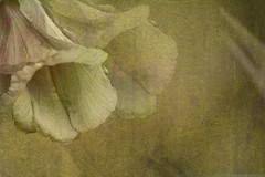 Golden Flowers (lynne bernay-roman) Tags: flowers photoshop golden bravo soft searchthebest textures layers flowerart naturesfinest magicdonkey flowerotica artlibre
