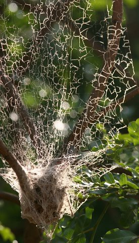 Social Spiders Nest View