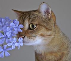 a dear kattie letter ...