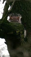 Secret Squirrel (tootdood) Tags: weird squirrel secret feeling watched