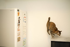 _MG_8071 (junku) Tags: cats cat canon eos fridge kitten sigma kitties 5d 猫 kin ねこ ネコ sigma50mmf28exdgmacro canoneos5d eos5d