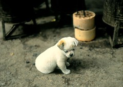Puppy and Coal Bricks II - by HKmPUA