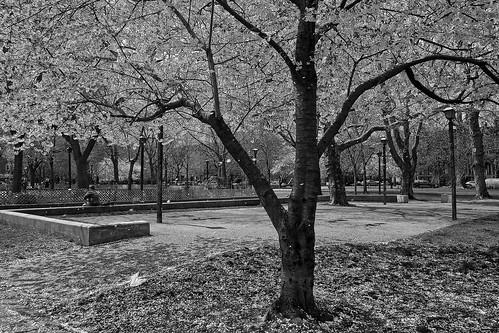 Fall in Hamilton Park