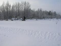 Sledge Dog Drive 2006 (christianstobbe) Tags: dog finland husky sledge