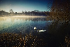 River in Italy (jsvamm) Tags: ifttt 500px swans mist water italy lake fog morning sky trees blue green light reflection
