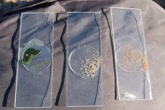 Alviso - 3 samples, 3 ecosystems, 3 colors