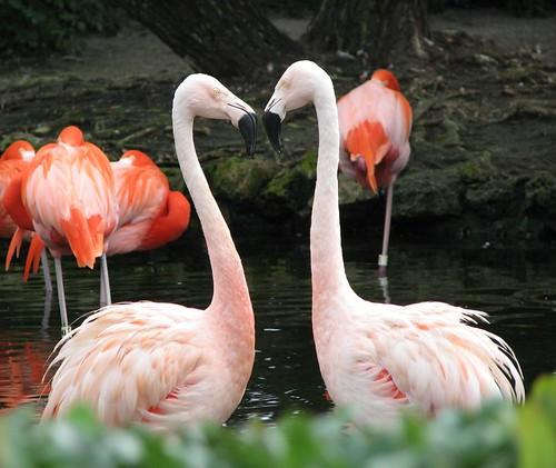 Flamingo Stare