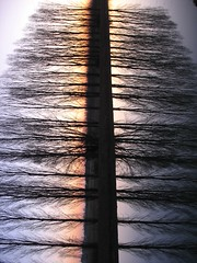 just one thing (Nicola Zuliani) Tags: trees sunset abstract reflection tree nature water vertical alberi backlight tramonto nicola violet natura double reverse astratto albero acqua controluce riflesso doppiosenso doppia rivieradelbrenta opticeffect nizu zuliani nicolazuliani nizuit nnart nnart654 wwwnizuit