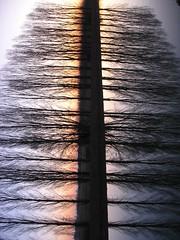 just one thing (Nicola Zuliani) Tags: trees sunset abstract reflection tree nature water vertical alberi backlight tramonto nicola violet natura double reverse astratto albero acqua controluce riflesso doppiosenso doppia rivieradelbrenta opticeffect nizu zuliani nicolazuliani nizuit nnart nnart654 wwwnizuit