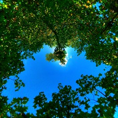 The tree of Life (Man) Tags: school autumn tree fall leaves gimp business explore management handheld hdr 360x180 spherical 360 hec stereographic planetoid hugin enblend i500 1xp littleplanet planetoids