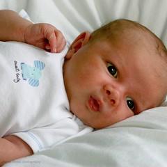 newborn monkey