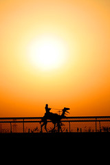 Camel On The Race Track (Ahmad Al Zarouni) Tags: camel race track arabia uae silhouette bushhaab                  dubai shadow sunise al khail road black red        converted bicycle google yahoo ping instagram favorite view mark
