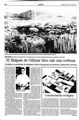 1991. Verbena