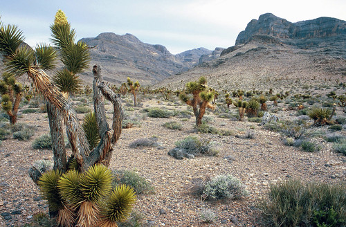 Pictures Of Las Vegas Nv. Nevada Desert: North of Las