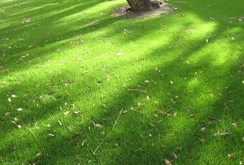 New grass 2