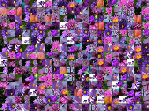 Purple Flower Montage