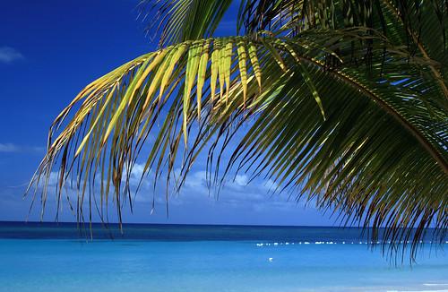 Spiaggia di Roatan, in Honduras.