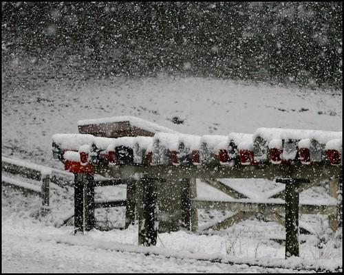 snownew