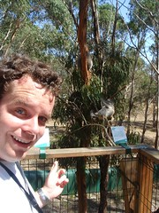 I Meet Some Koalas