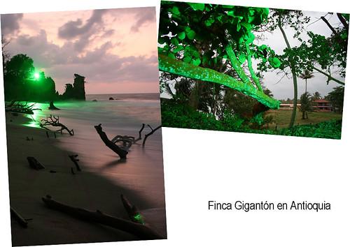 Punta Gigantón