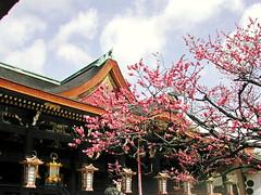 -030308-17 (newton_tigers) Tags: kyoto   kitanotenmangu