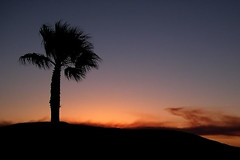 solitary (paul veraguth) Tags: ocean sunset palm