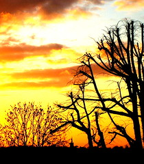 Sunset gale (GatheringZero) Tags: sunset orange tree church silhouette clouds branches gale spire hornchurch