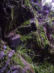 Roca y verde 2