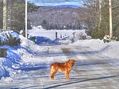 Balade-hivernale