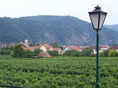 Vineyard in Wachau, Austria