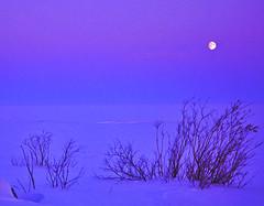 Moonset on the shore (Henri Bonell) Tags: winter sea moon snow finland shore moonset helluva bothnianbay permeri bottenviken aplusphoto henribonell superbmasterpiece goldenphotographer