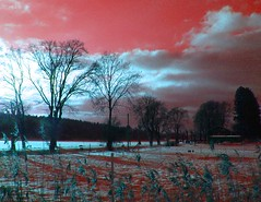 Red nature (Per Ola Wiberg ~ Powi) Tags: trees sky reed nature clouds wow ps abc february avenue trd 2007 vass manipulatedphotos all eker ekebyhov ekebyhovsallen