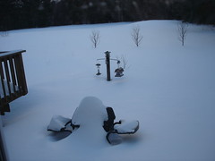 snow storm - morning back yard