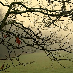 Hanging on (~J0~ (away)) Tags: park england nature wet square leaf branches norfolk foggy norwich raindrops soggy damp hangingon earlhampark