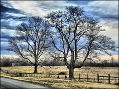 The Tale of Two Trees (Betty Sue) Tags: naturesfinest blueribbonwinner abigfave impressedbeauty flickrbest irresistiblebeauty goldenphotographer treatmephotos