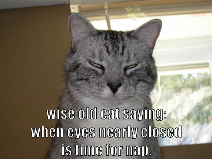 wiseoldcat2
